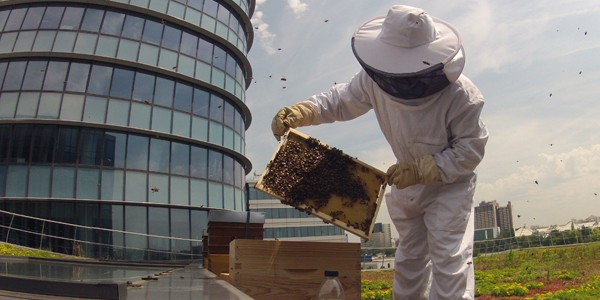 ruche_christophe_gervais_bouygues_apiculture_urbaine_innovation_genarisgroup
